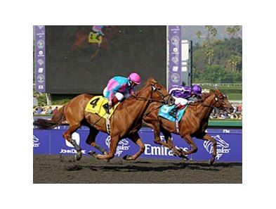 "20009 Breeders' Cup Marathon winner Man of Iron<br><a target=""blank"" href=""http://www.bloodhorse.com/horse-racing/photo-store?ref=http%3A%2F%2Fpictopia.com%2Fperl%2Fgal%3Fprovider_id%3D368%26ptp_photo_id%3D8609279%26ref%3Dstory"">Order This Photo</a>"