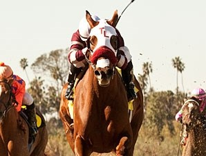 Willa B Awesome wins the 2012 Santa Ysabel.