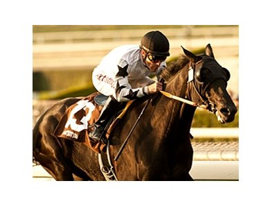 Slim Shadey won the 2013 San Marcos Stakes.