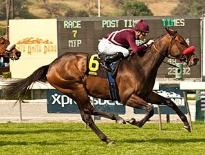 Tiz Flirtatious Flies Home in Santa Ana