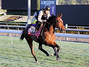 Just The Judge - 2014 Breeders' Cup