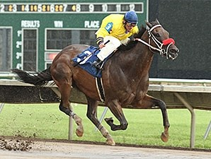 I'll Show Them wins the 2012 Shot of Gold Stakes.