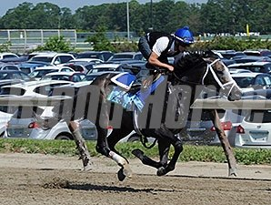 Incognito jogs at Belmont Park 6/2/2013.