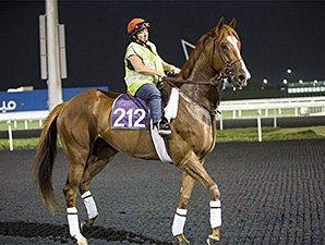 Little Mike, Dullahan Jog at Meydan