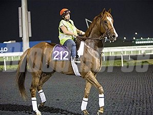 Dullahan's first visit to the track at Meydan.