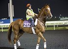 Dullahan's first track visit at Meydan in Dubai.