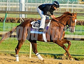 Dullahan at the 2011 Breeders' Cup.