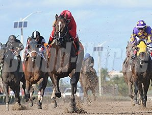 Weekend Hideaway wins the 2015 Florida Sunshine Millions Sprint Stakes.
