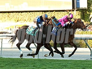 Alert Bay wins the 2015 California Cup Turf Classic.