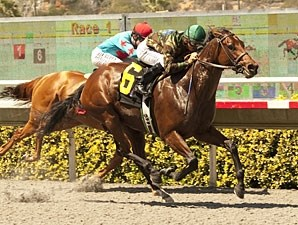 Gypsy Robin wins the CERF Stakes.