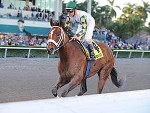 Mucho Macho Man wins the 2014 Florida Sunshine Millions Classic.