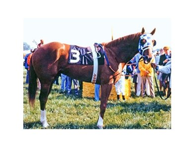 "Secretariat at the 1973 Preakness<br><a target=""blank"" href=""http://photos.bloodhorse.com/Thoroughbred-Greats/Secretariat/28202176_QLbRX9#!i=2384958923&k=PTHk88H"">Order This Photo</a>"