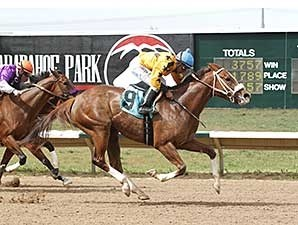 Fast Puff wins the 2014 Ingrid Knotts Stakes.