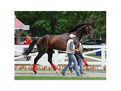 "Fort Larned schooling at Saratoga.<br><a target=""blank"" href=""http://photos.bloodhorse.com/AtTheRaces-1/at-the-races-2013/27257665_QgCqdh#!i=2658858461&k=x2Pm6Kt"">Order This Photo</a>"