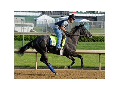 "Mylute<br><a target=""blank"" href=""http://photos.bloodhorse.com/TripleCrown/2013-Triple-Crown/Kentucky-Derby-Workouts/29026796_jvcnn8#!i=2487725846&k=Gqc3xhc"">Order This Photo</a>"