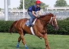 Wise Dan works on the turf at Churchill Downs on June 28.