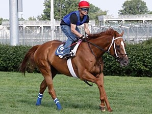 Wise Dan at Churchill Downs on June 28, 2011.