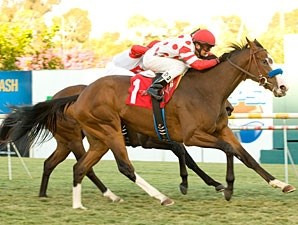 Neversaidiwassweet racing in the Miesque Stakes.