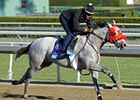 "He's Had Enough preps for the Breeders' Cup.<br><a target=""blank"" href=""http://photos.bloodhorse.com/BreedersCup/2012-Breeders-Cup/Works/26130247_gxH6nS#!i=2183298163&k=VNCVmDG"">Order This Photo</a>"