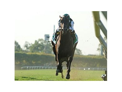 "Western Aristocrat, son of Mr. Greeley, won the Jamaica Handicap on Oct. 8.<br><a target=""blank"" href=""http://www.bloodhorse.com/horse-racing/photo-store?ref=http%3A%2F%2Fpictopia.com%2Fperl%2Fgal%3Fprovider_id%3D368%26ptp_photo_id%3D9705417%26ref%3Dstory"">Order This Photo</a>"