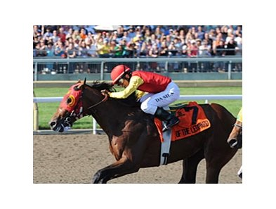 Queen's Plate winner Eye of the Leopard tries turf in the Breeders' Stakes at Woodbine.