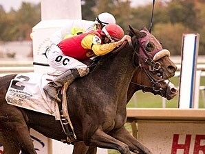 Maddy's Dance wins the 2013 Maryland Million Distaff.
