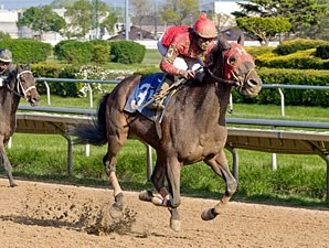 River Bear wins the 2012 Robert S. Molaro Handicap.