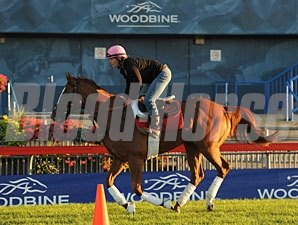 Wise Dan - Woodbine September 15, 2012.