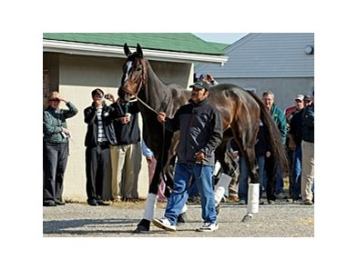"Zenyatta draws a crowd as she arrives at Churchill Downs.<br><a target=""blank"" href=""http://www.bloodhorse.com/horse-racing/photo-store?ref=http%3A%2F%2Fpictopia.com%2Fperl%2Fgal%3Fprovider_id%3D368%26ptp_photo_id%3D9261791%26ref%3Dstory"">Order This Photo</a>"