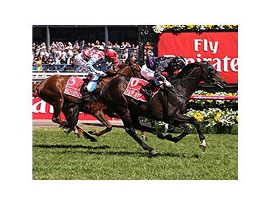 Fiorente wins the Melbourne Cup.