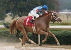 Taptam won the Pippin Stakes in January.