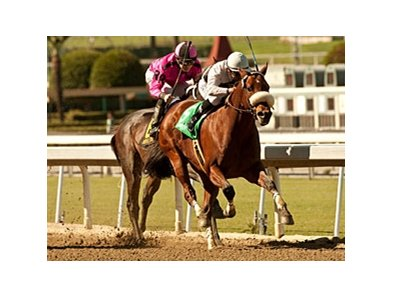 Amazombie takes on 8 in the Potrero Grande Stakes at Santa Anita Park.