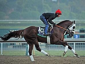 Fast Bullet Horse Profile Bloodhorse