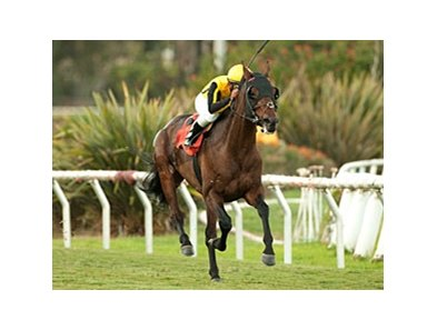 Sanagas won the Hollywood Turf Cup by 3 1/4 lengths last November.