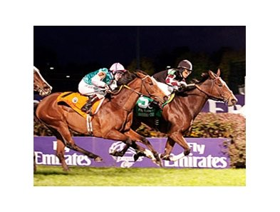 "Shared Account upsets the Breeders' Cup Filly & Mare Turf.<br><a target=""blank"" href=""http://www.bloodhorse.com/horse-racing/photo-store?ref=http%3A%2F%2Fpictopia.com%2Fperl%2Fgal%3Fprovider_id%3D368%26ptp_photo_id%3D9266783%26ref%3Dstory"">Order This Phot"