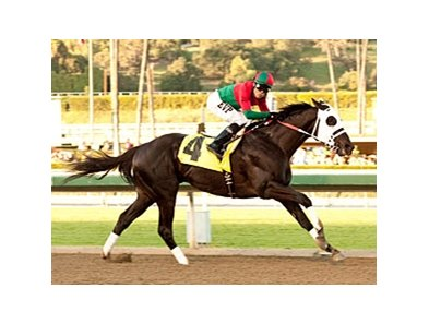Ultimate Eagle is favored among the 13 in the Santa Anita Handicap.