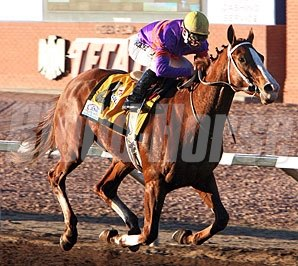Poni Colada cruises to victory in the Borderland Derby.