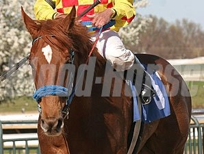 Winning Image in the Langhorne Stakes.