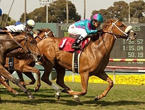 Sarah's Secret wins the 2011 Honeymoon.