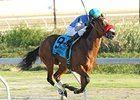 Goldencents won the Delta Downs Jackpot in November.