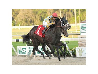 Tampa Bay Derby Winner Prospective