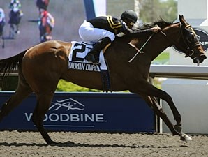 Madman Diaries wins the 2010 Victoria Stakes.