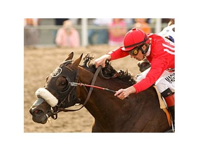 "Informed will try to give trainer Doug O'Neill his 5th Hollywood Gold Cup.<br><a target=""blank"" href=""http://www.bloodhorse.com/horse-racing/photo-store?ref=http%3A%2F%2Fpictopia.com%2Fperl%2Fgal%3Fprovider_id%3D368%26ptp_photo_id%3D8243504%26ref%3Dstory"">Order This Photo</a>"