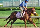 "Rose to Gold<br><a target=""blank"" href=""http://photos.bloodhorse.com/TripleCrown/2013-Triple-Crown/Kentucky-Derby-Workouts/29026796_jvcnn8#!i=2490704665&k=QTSLNSw"">Order This Photo</a>"