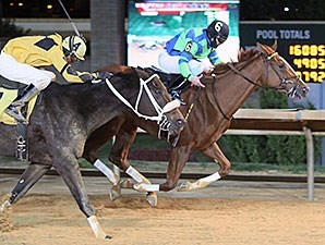 Red Hot Diva wins the 2013 My Sister Pearl Stakes.