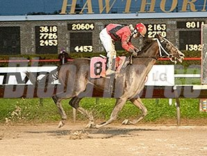 Mavericking wins the 2013 Buck's Boy Handicap.