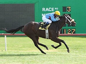 Smarty B wins the 2012 Chandler Stakes.