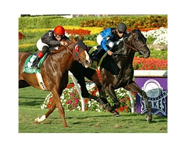 "Einstein holds off Dancing Forever to take the Gulfstream Park Turf.<br><a target=""blank"" href=""http://www.bloodhorse.com/horse-racing/photo-store?ref=http%3A%2F%2Fpictopia.com%2Fperl%2Fgal%3Fprovider_id%3D368%26ptp_photo_id%3D3655479%26ref%3Dstory"">Order This Photo</a>"
