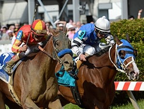 Fiftyshadesofhay (left) wins the 2013 Black-Eyed Susan.