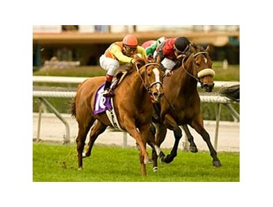 "Foxysox charges home to win the Tuzla Handicap at Santa Anita Park. <br><a target=""blank"" href=""http://www.bloodhorse.com/horse-racing/photo-store?ref=http%3A%2F%2Fpictopia.com%2Fperl%2Fgal%3Fprovider_id%3D368%26ptp_photo_id%3D7544899%0D%0A%26ref%3Dstory"">Order This Photo</a>"
